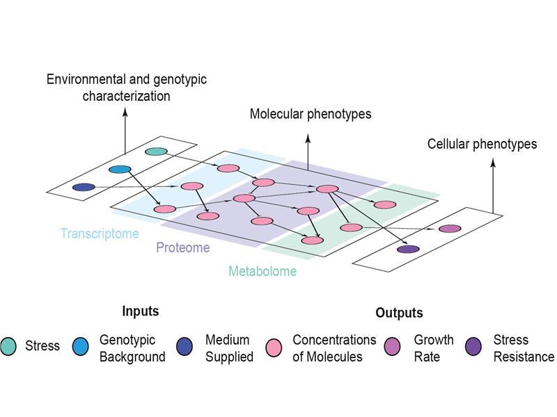 Multi-omics Predictive Modeling